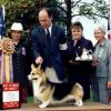 2001 Best of Breed - Ch Foxlor Shafrhaus Sammy Sosa